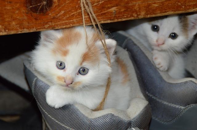 lieve katjes